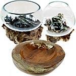 Wurzelholz / Glasschalen